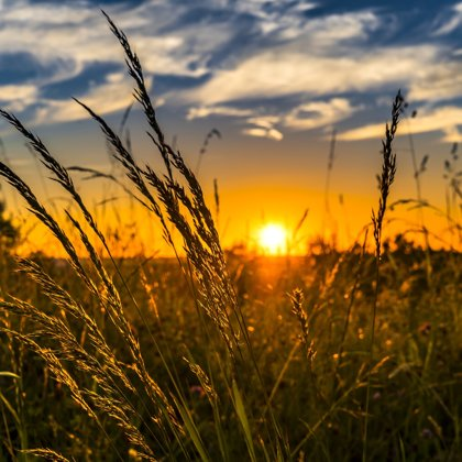 Být malým broučkem, sedíte na stébélku trávy, pak roztáhnete křídla a letíte ke slunci.