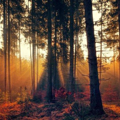 Pohádkový les. Zajisté má i svá kouzla. V noci se tu prý dějí divné věci!