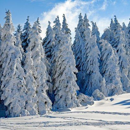 Že by z pohádky Mrazík? Ale ne. Je to neobyčejně krásná zasněžená krajina.