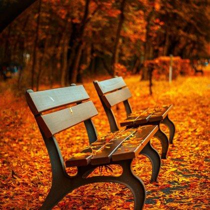Je pokročilý podzim. Není příjemné počasí. Sedíte na této lavičce. Nikdo zde není, jen Vy.