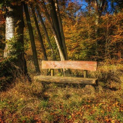 Tato lavička v lese pamatuje více, než by se mohlo zdát. Ještě, že je hezké a veselé léto.