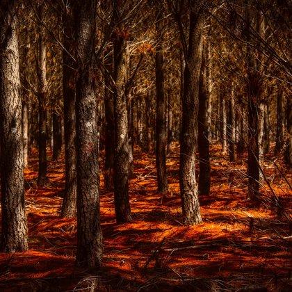 Nacházíme se v pravěkém lese. Zvláštně oranžová zem budí silné emoce z pradávné minulosti.