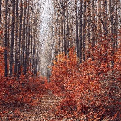 Velice zvláštní les, který je propojen jen věčnou samotou. Ještě není pozdě na návrat.