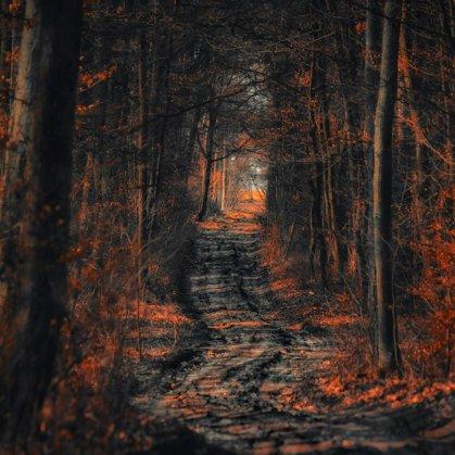 Temná cesta temným lesem. V blízkosti se nachází výstup z lesa.