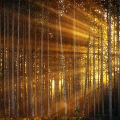 Tento les je sice velmi tajemný, ale prosvítá zde naděje. Tak vznikl život.