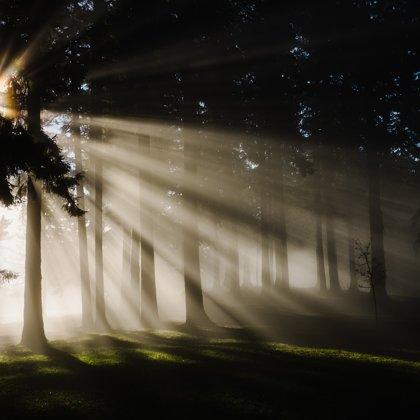 Jsme na temné straně lesa. Je to chladné a nesmírně osiřelé místo. Co je na druhé straně?
