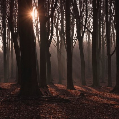 Tajemné a temné lesy