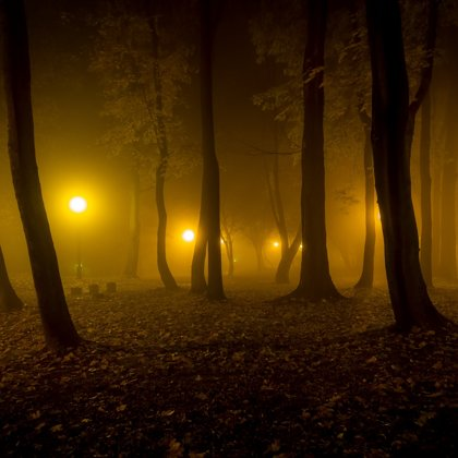 Procházíme tajemným lesoparkem a trochu se uhli stranou. Je mlha a není moc dobře vidět.