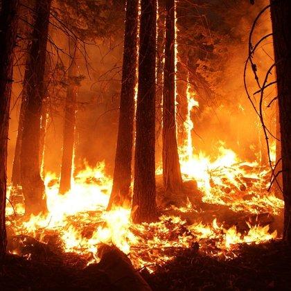 Cesta do pekla. Nenasytné plameny ohně pohlcují les. Je tu pekelné horko.