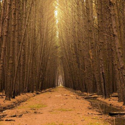 Těžko říct, kam vede tato lesní brána. Konec je daleko a cesta je značně nevyzpytatelná.