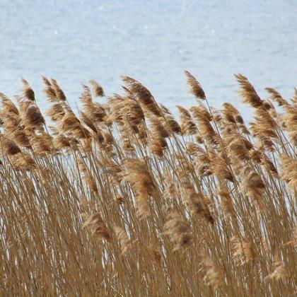 Zvláštní místo. Pohybující se klásky suchých travin ve větru, šplouchání vody a ticho...
