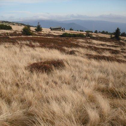 Husté porosty seschlé trávy vytváří zajímavě nadýchanou vrstvu. Brzy ji pokryje bílý sníh.